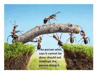 Spreuk met mieren