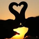 olifanten maken hart