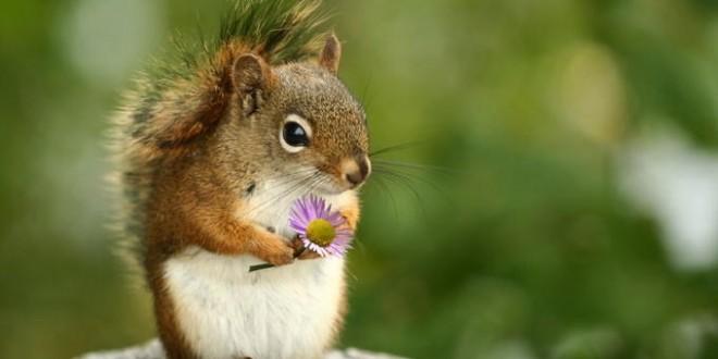 Het meisje met de hoed en de eekhoorn